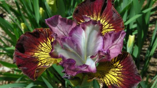 видеть необычный цветок