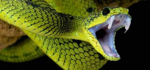 змея с зубами во сне
