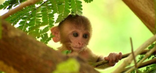 маленькая обезьянка во сне