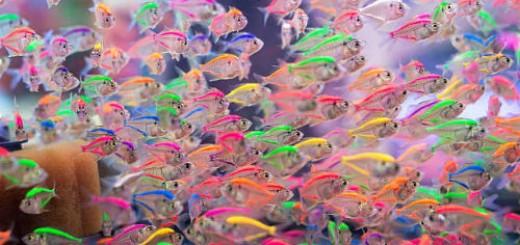 маленькие рыбки во сне