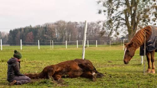 мертвая лошадь во сне