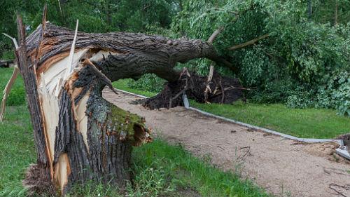 падающие деревья