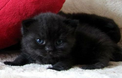 Сонник Котята Маленькие Много Черные