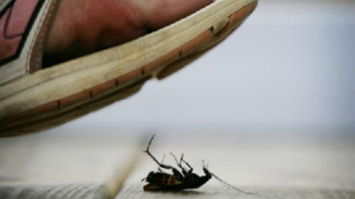 убивать тараканов