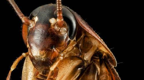 большой таракан живой во сне