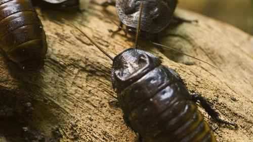 черные насекомые