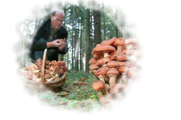 К чему беременной снится грибы 68