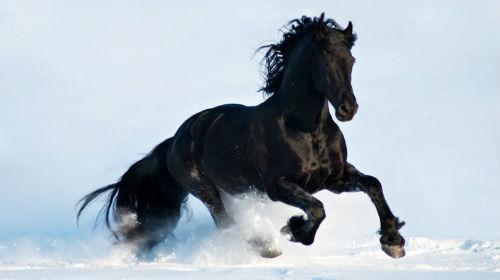 черная лошадь во сне