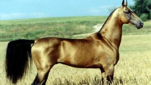 к чему снится лошадь мужчине