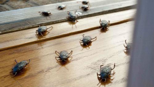 много тараканов черных во сне