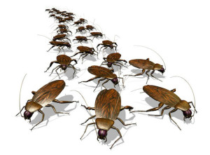 сонник - много тараканов