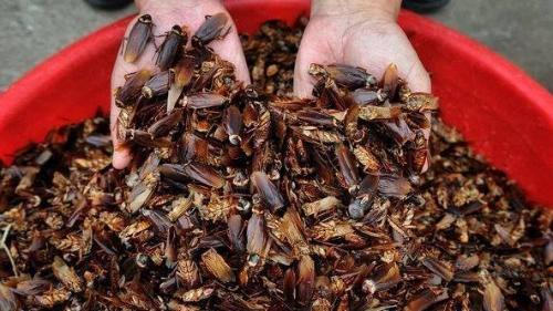 к чему снятся тараканы женщине много