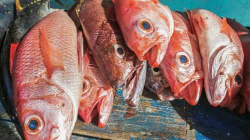 свежая рыба на рынке