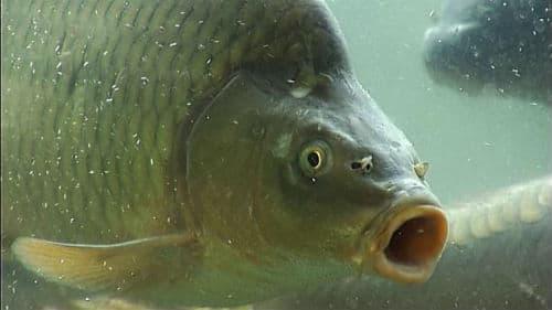 купить живую рыбу