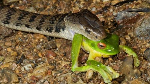 змея кусает