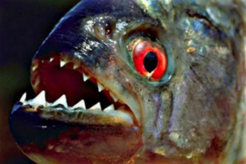 рыба укусила во сне