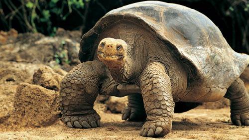 черепаха большая во сне