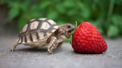 укусила черепаха