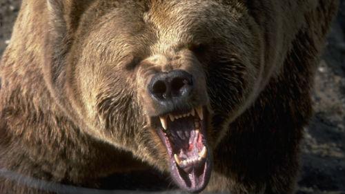 Сонник приснился медведь к чему снится медведь во сне