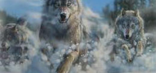 к чему снится волк