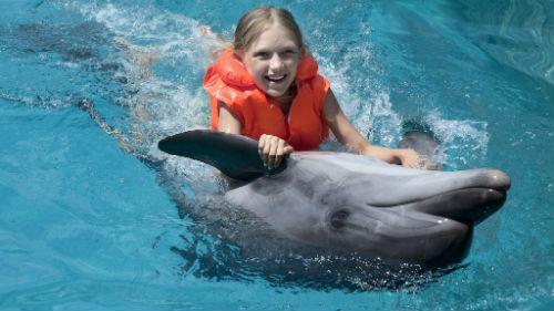 Сонник дельфин во сне к чему снится дельфин