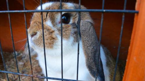 видеть кролика в клетке