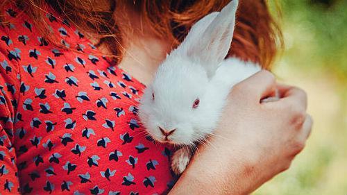 белый крольчонок в руках девушки