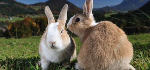 кролики живые во сне