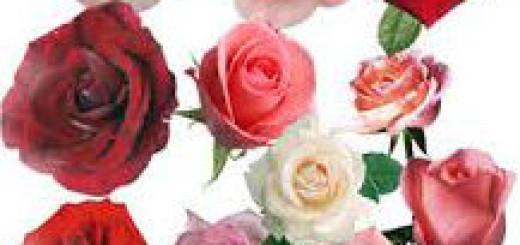 к чему снятся розы