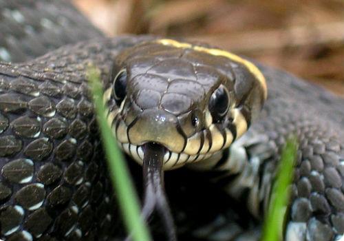 Сонник приснилась змея к чему снится змея во сне