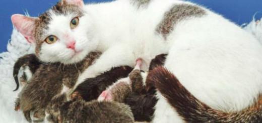 Кошка с котятами к чему снится
