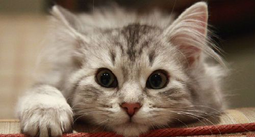 Значение кота во снах