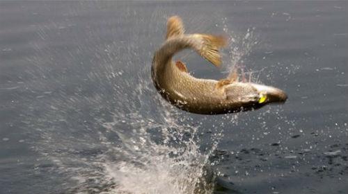 Снилось Рыба В Воде