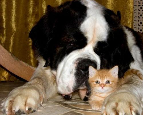 К чему снится большая лохматая собака женщине фото