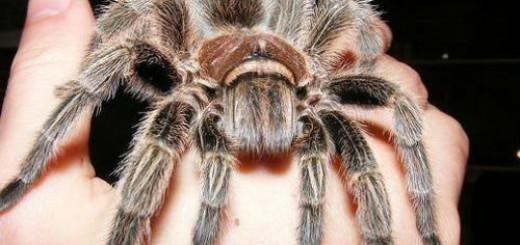 Сонник большой паук к чему снится большой паук во сне