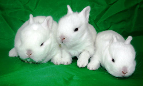 К Чему Снятся Белые Кролик