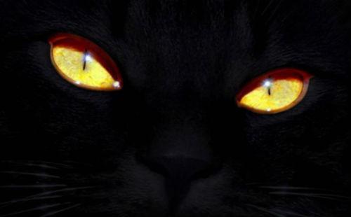Кошачьи глаза