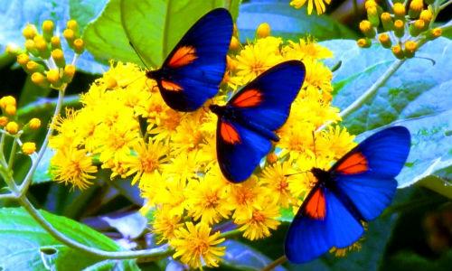 Чтобы лучше разобраться в толковании, понять, что конкретно вас ждет, вспомните другие детали сновидения: цвет насекомого, его размер, количество бабочек, а также, место, где их видели, что с ними делали.
