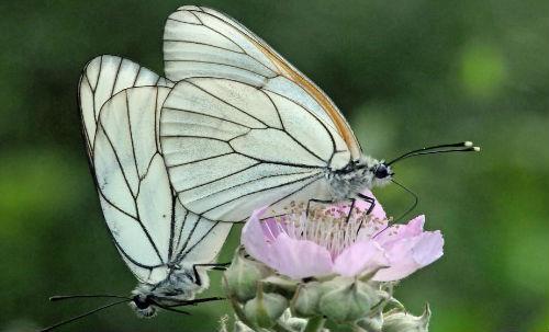в школе бабочек ловили для