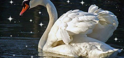 Белый лебедь толкование сонника