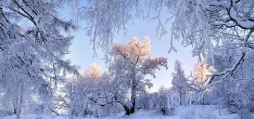 Белый снег февраль