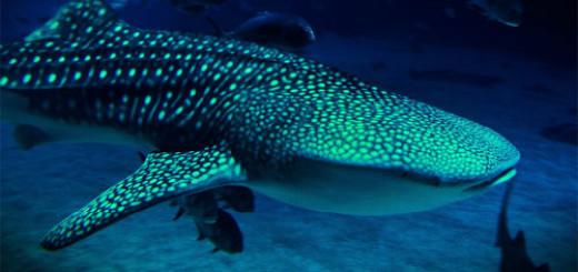 Большая рыба толкование сонника
