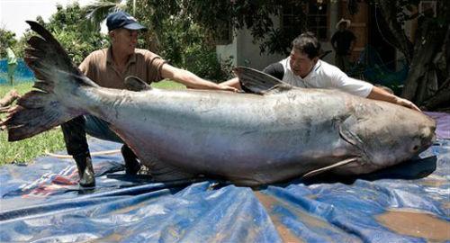 Большая рыба в воде толкование сонника