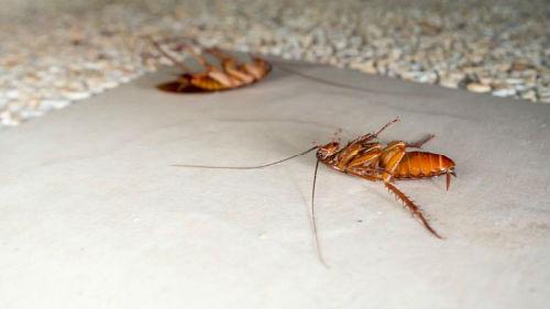 приснились дохлые тараканы