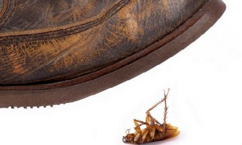 давить тараканов во сне