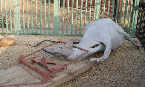 Дохлые крысы толкование сонника