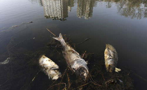 рыба в грязной воде
