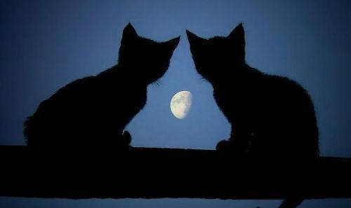 Луна толкование по соннику