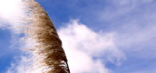 Ветер толкование сонника