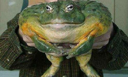 Жаба толкование сонника